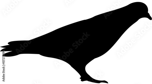 dove silhouette vector - Buy this stock vector and explore