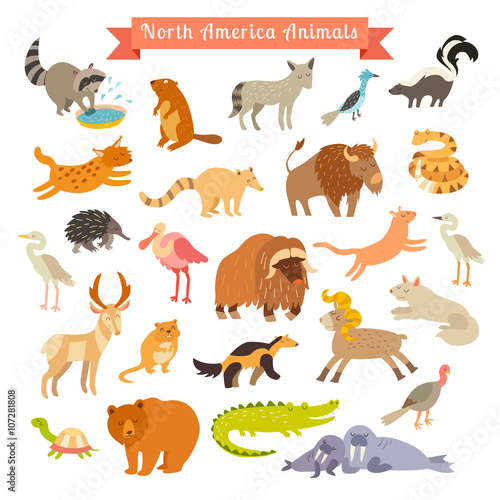 Foto op Aluminium Zoo North America animals vector illustration. Big vector set. Isolated on white background. Preschool, baby, continents, travelling, drawn