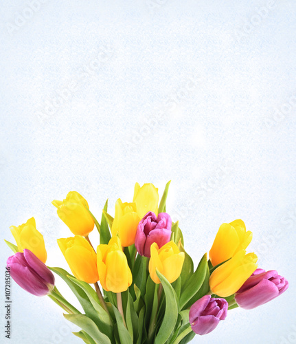 Fototapety, obrazy: bouquet of tulips isolated on white background selective soft focus toned photo