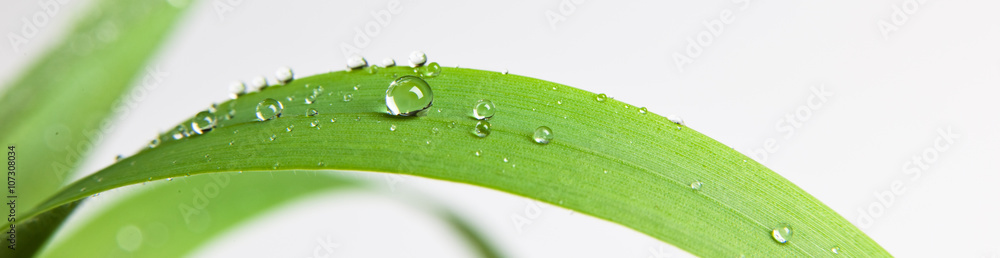 Fototapety, obrazy: bubble drop on clover isolated on white