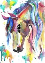 Horse Head. Color Watercolor Illustration. Hand Drawn