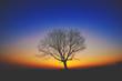 Drzewo o zachodzie słońca na tle kolorowego nieba
