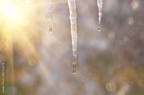 icicles on a blurred background