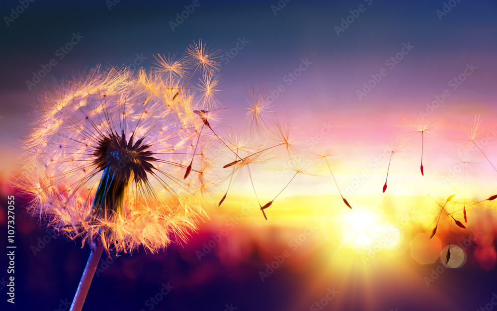 Fototapety, obrazy: Dandelion To Sunset - Freedom to Wish