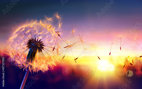Foto op Plexiglas Paardenbloem Dandelion To Sunset - Freedom to Wish