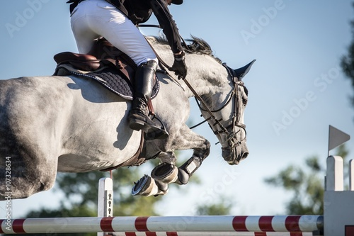 Acrylic Prints Horseback riding Horse Jumping, Equestrian Events