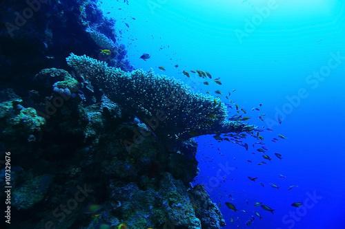 Spoed Foto op Canvas Turkoois divers underwater landscape
