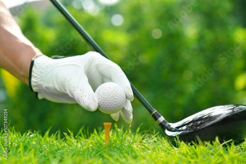 Plakat Golfista ręka trzyma piłkę golfową z kierowcą na zielonej trawie z pola golfowego tłem