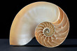 Nautilus shell, perfect golden section on black, clipping path