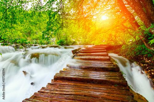 Naklejka premium Droga leśna latem w parku narodowym plitvice