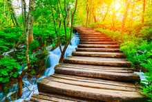 Wooden Path In National Park I...
