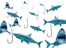 Ami Da Pesca E Squali