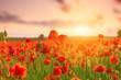 Poppies field meadow in summer