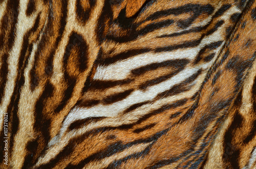 Photo sur Toile Les Textures tiger fur background texture
