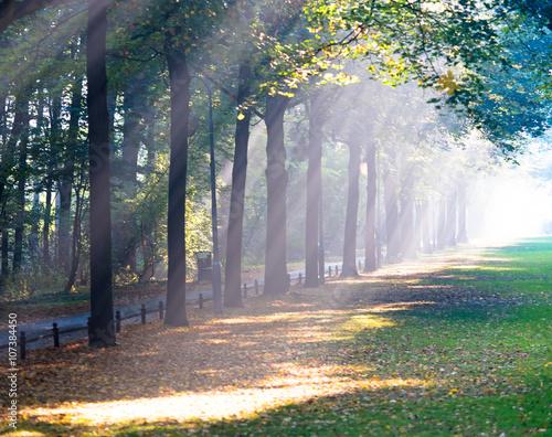 Fotografie, Obraz  Sonnenstrahlen im Park