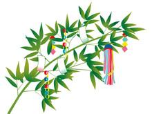 Bamboo Of TANABATA Festival