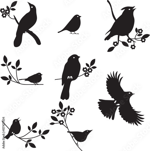 Valokuva  Vector Collection of Bird Silhouettes