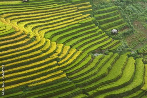 Garden Poster Rice fields rice fields