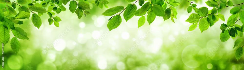 Fototapety, obrazy: Grüne Blätter und leuchtender Panorama Hintergrund bilden Rahm