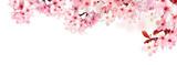 Fototapeta Kwiaty - Verträumte Kirschblüten als Bordüre auf weißem Hintergrund
