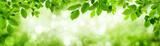 Fototapeta Las - Grüne Blätter und leuchtender Panorama Hintergrund bilden Rahm