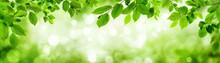 Grüne Blätter Und Leuchtende...