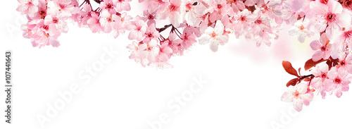 Deurstickers Bloemen Verträumte Kirschblüten als Bordüre auf weißem Hintergrund