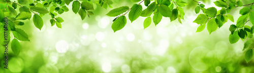 Grüne Blätter und leuchtender Panorama Hintergrund bilden Rahm Poster Mural XXL