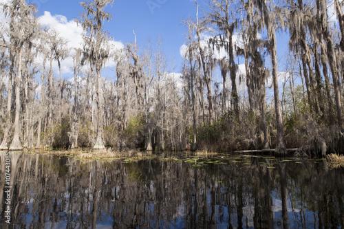 Fotografie, Obraz  Okefenokee swamp in Georgia, USA