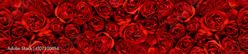 Photo  Red roses in a panoramic image