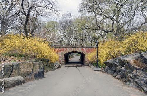 Zdjęcie XXL Central Park, Nowy Jork