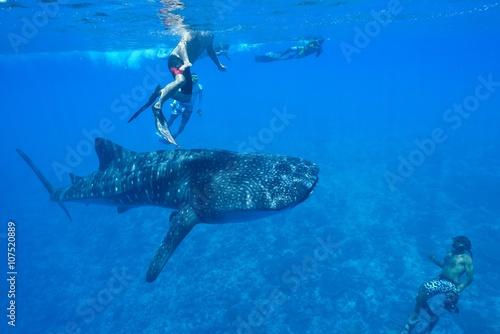 Printed kitchen splashbacks Fishing whale shark