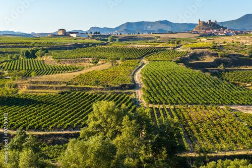 Photo Viñedo, San Vicente de la Sonsierra al fondo, La Rioja (España)