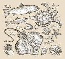Sea Animals. Hand-drawn Sketch...