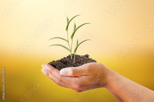 Valokuva  Human hand holding plant with soil on blurred abstract sunset background