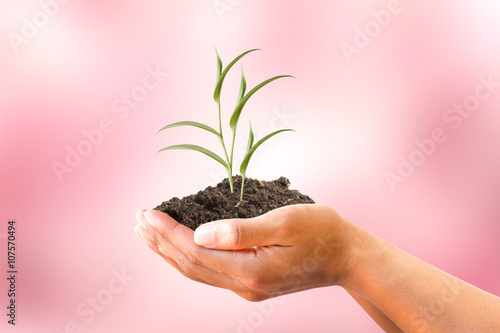 Valokuvatapetti Human hand holding creeping plant with soil on blurred pink background