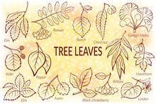 Set Of Nature Pictograms, Tree Leaves, Willow, Hawthorn, Poplar, Aspen, Ginkgo Biloba, Elm, Alder, Linden, Rowan, Chestnut, Black Chokeberry And Beech. Eps10, Contains Transparencies. Vector