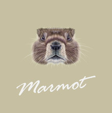 Vector Illustrated Portrait Of Marmot.