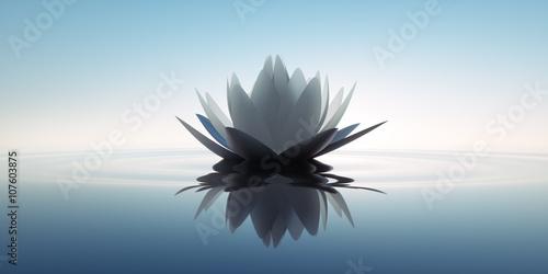 Fototapety, obrazy: Lotusblüte in dunklem Wasser 1
