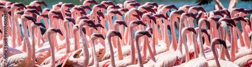 Garden Poster Flamingo Big group flamingos on the lake. Kenya. Africa. Nakuru National Park. Lake Bogoria National Reserve. An excellent illustration.