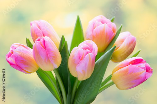 Spring flowers. Tulip bouquet on the bokeh background. - 107606678