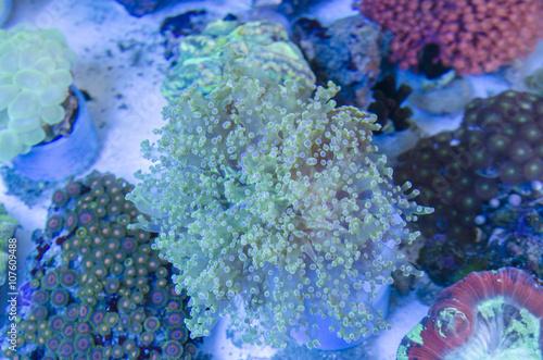 Fototapety, obrazy: Underwater Fantasy coral