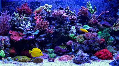 Poster Coral reefs Amazing Coral Reef Aquarium moment