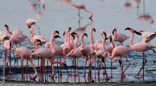 Foto op Aluminium Flamingo Flamingos on the lake. Kenya. Africa. Nakuru National Park. Lake Bogoria National Reserve. An excellent illustration.