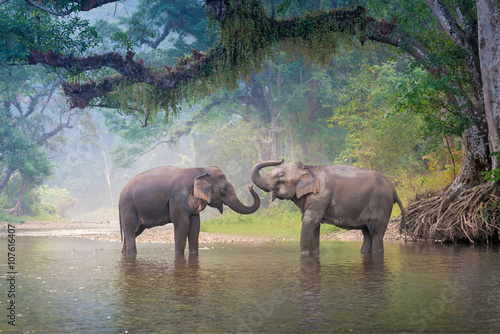 Photo sur Toile Elephant Asian Elephants in a natural river at deep forest, Thailand