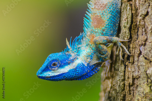 Staande foto Kameleon Chameleon on the tree