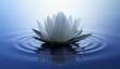 Lotusblüte in dunklem Wasser 3
