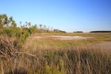 South Carolina Wetlands