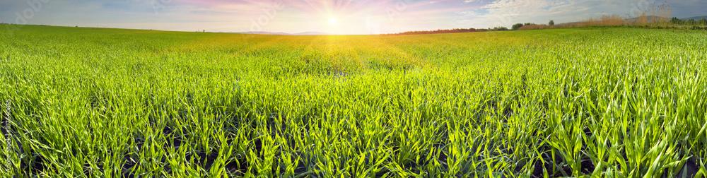 Fototapety, obrazy: Fresh green field