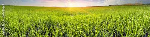 Montage in der Fensternische Gras Fresh green field